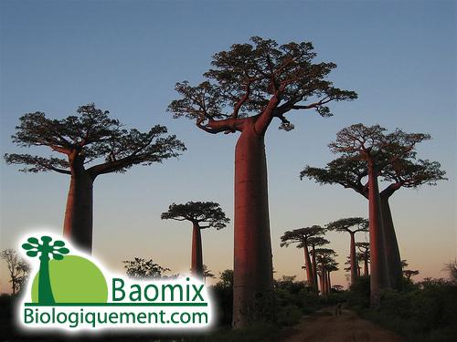 Photo panoramique 360° réalisée du haut d'un baobab à Andavadoaka Madagascar