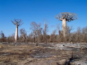 Déforestation par l'agriculture sur brûlis