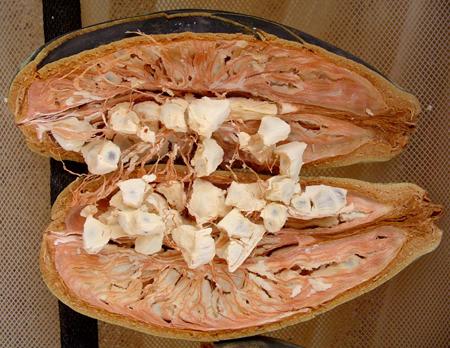 sans-gluetn-baofruit-baobab-fruit-antioxydant-baomix-biologique-agoji-david-hervy-bio