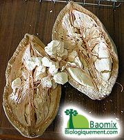 180px-Baobab_Frucht