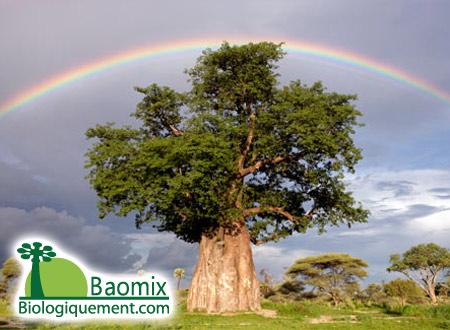 Fruchtfleisch-Inkoop- fruit-baobab-pulp-organic-pulpa-fruto-fruktkjøtt-열매는-과육의-мякоть-плодов-баобаба-fruta-baobab-pulpa-giay-bao-bap-polpa-バオバブの-frutto-baobab-Fruchtfleisch-的猴面包果肉-لب فاكهة من الباوباب