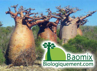 La symbiose entre le baobab et le champignon